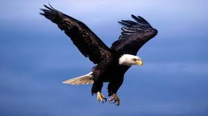 Eagle Heilen